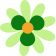 Saint Patrick Flower 06