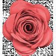 Sweet Days Rose