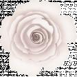 Dex Mini Kit Rose