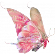 Butterfly Names of God Add-On