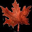 Autumn Mini Kit Watercolor Maple Leaf