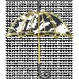 Radiant Rain - Element - umbrella