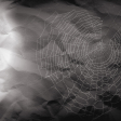 Fall All Over - Paper - Spider Web