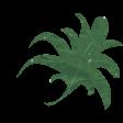 wet green leaf1