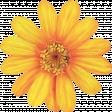 Honey Painted Flower 01