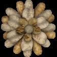 Neutral Flower 04