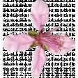 Pink Flower (02)