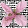 Pink Flower (04)