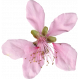 Pink Flowers (05)