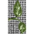 Bearly Spring Leaf (02)