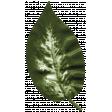 Bearly Spring Leaf (01)