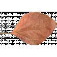 Pumpkin Patch Leaf 01