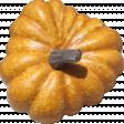 Pumpkin Patch Gourd 03