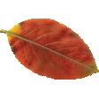 Autumn Wind Elements - leaf 06
