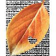 Autumn Wind Elements - leaf 08