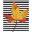 Autumn Leaf 01