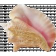 Stunning Seashell
