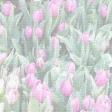 Tulip Paper