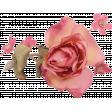 Rose Flower Cluster