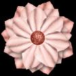 Coral Spring Sparkle Flower