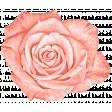 Spring Sparkle Coral Rose