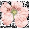 Lt Coral Flower