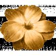 Spring Sparkle Orange Flower