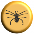 Spider Brad 1