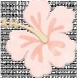 Winter Tropics Hibiscus 1