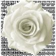 Rebel Rose White Rose