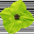 Our House - Light Green Flower