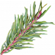 Nutcracker December BT Mini Kit - Green Pine Branch