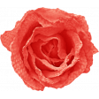 Sweater Weather - Red Fabric Rose