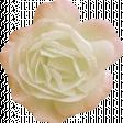 Jane - White and Pink Rose