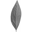 Shine - Leaf 01 Template