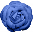 Reflections - Blue Rose