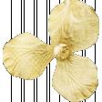 Shine - Little Gold Flower