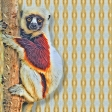 Lemur Paper
