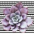 Fresh Start Elements - Succulent 2