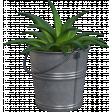 Cactus in a Bucket
