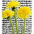 @Sas_Scrapkit_FloralSummer_Element01