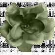 MSC - Green Flower