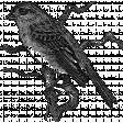 Bird Stamp 1