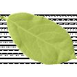 Sparkling Summer - Leaf