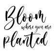 Bloom Where You Are Planted (with white boarder)