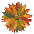 Flower - Autunm/fall leaves 3/3