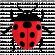 Ladybug 3/4