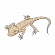 Lizard 1 - Petrii Gecko