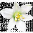 Fruitopia Kit Flower 2