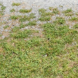 Grass Gravel